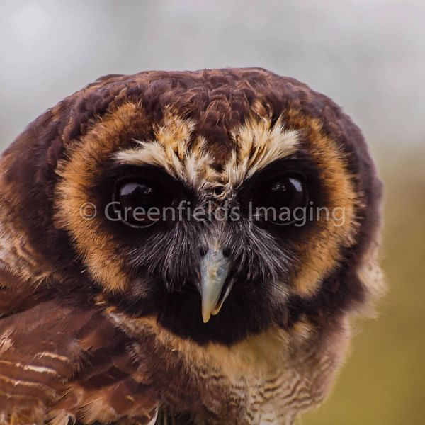 greenfieldsimaging's featured image