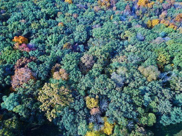 Fall Color Pop