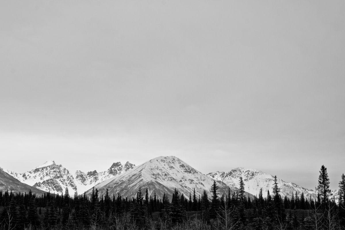 Alaska Pine Tree Tops and Mountain-1