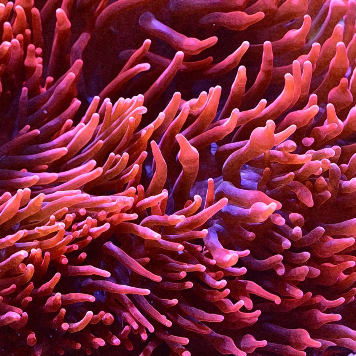 Sea Anemone Oil Painting