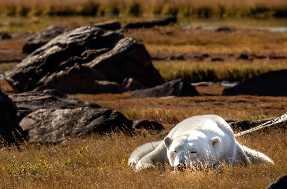 IMG_0824 Let Sleeping Bears Lay