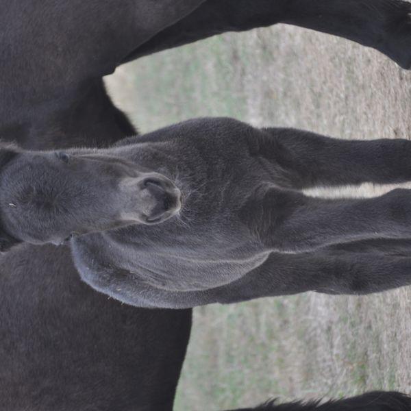 renata's featured image