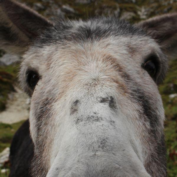 finnerdmann's featured image