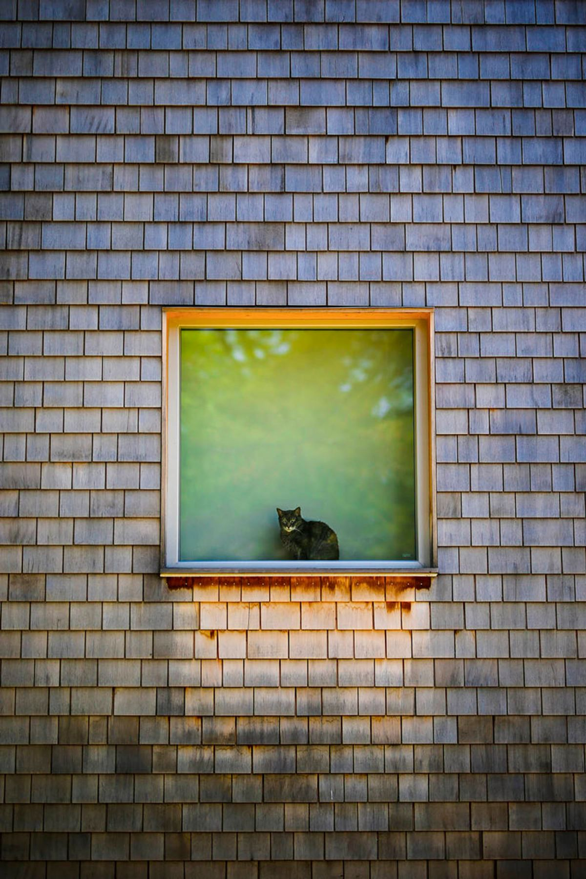 Cat-Window-Web-1500-800x1200.jpg