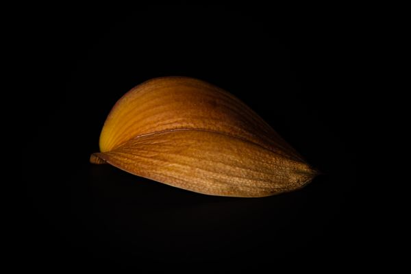 Dead Orchid Leaf - 12.17.19 (1).jpg