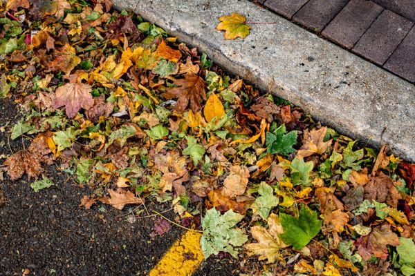 Colorful Leaves on Asphalt - 11.02.19.jpg