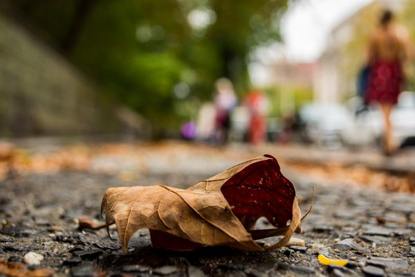 Closeup of Leaf on the Ground in the City