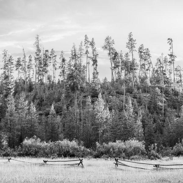 Trees Beyond