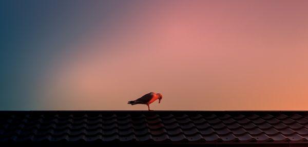 Bird bows to sunrise.jpg