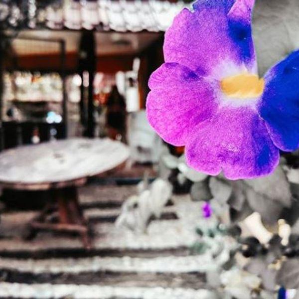 bangalancarmina's featured image