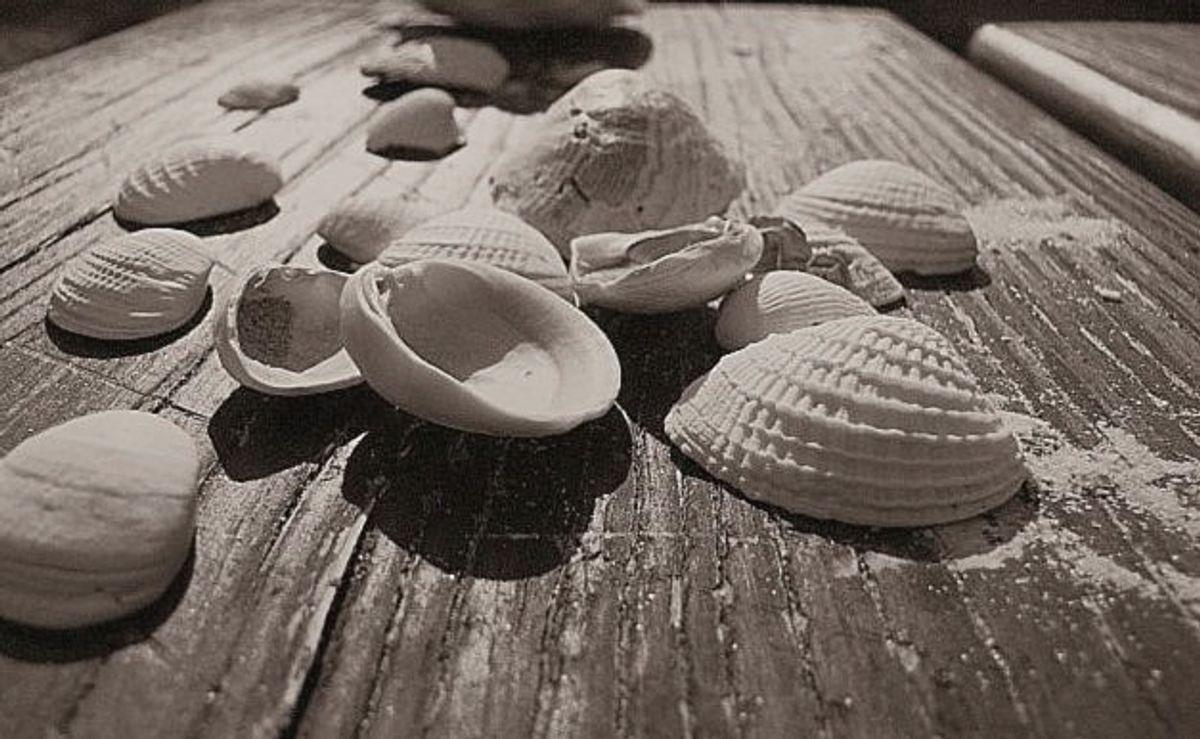 Sandy Sea Shells